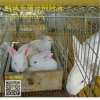 兔籠子,兔籠底板,兔籠子批發,兔籠鐵絲網