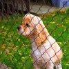 养殖防护网、养鸭围栏网、浸塑小勾花网、浸塑勾花网