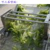 热销 大枣清洗机 气泡气浴清洗机 农产品加工机械设备