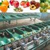 小型果蔬自动分拣选果机桃子分选机