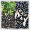 昌嶽供應 黑豆皮提取物 25%花青素 抗氧化