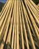 FD-161023廠家大量供應優質毛竹