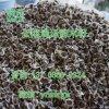云南满泽贵州辣木籽种植基地,贵州辣木籽,辣木籽产地