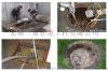 无锡锡山区化粪池清理、污水池清理