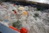 龙虾加工设备 小龙虾清洗机 气泡臭氧洗虾机
