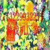 大圣斗鸟游戏机8人游戏机价格广州游戏机价格