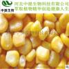 供玉米提取物 植物甾醇95% 食品添加剂 现货包邮 高品质【中提】