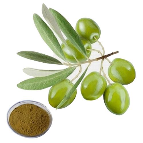 橄榄叶提取物图片