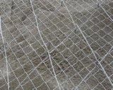 供应蜘蛛网spider