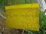 农业粘虫板24*20的,厂家促销,不流胶,不变形,不弯曲,质量保证