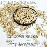 现货批发天津港进口皮燕麦 动物饲料 燕麦片原粮加工