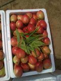 代銷冠縣油桃