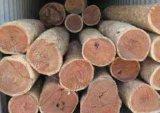 广州深圳东莞代理进出口原木,红木,板材,木方