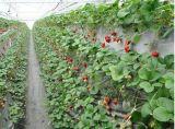 泽阳zy-2100河北草莓立体种植槽出售