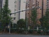 成都路灯杆 监控杆 美化树