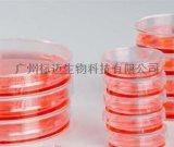 表面测试培养皿