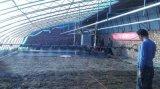 邯郸温室大棚育苗喷灌机水车喷水车双轨道自走式移动遥控调速