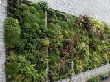 垂直綠化牆
