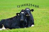 養殖肉牛要選赤樂川肉牛飼料預混料