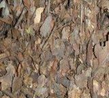 天津橡樹葉保定橡樹葉北京橡樹葉批發價格發酵橡樹葉