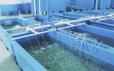 室内养殖什么最赚钱_室内养殖项目_室内小型养殖项目