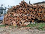 大量供应用于建筑/桥梁/车船/家具/器具的柏木/优质柏木批发