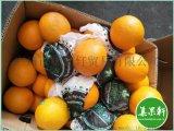新鲜水果,埃及进口新鲜酸橙,广州江南市场