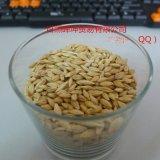進口大麥 進口澳麥 源自澳大利亞 飼料大麥