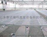 溫室大棚苗牀設備供應