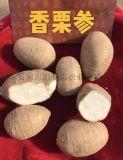 现代农业观光园高端品种-香栗参