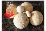 河南高鋁耐火球價格多少?科瑞耐材廠家定制直銷耐火瓷球價格優惠