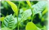 产品目录 农业食品 动植物提取物 > 西洋参皂甙
