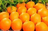 赣南脐橙  丰富维C