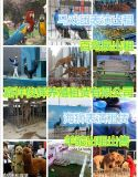 俊辉动物出租公司 萌宠展览 动物租赁 羊驼出租