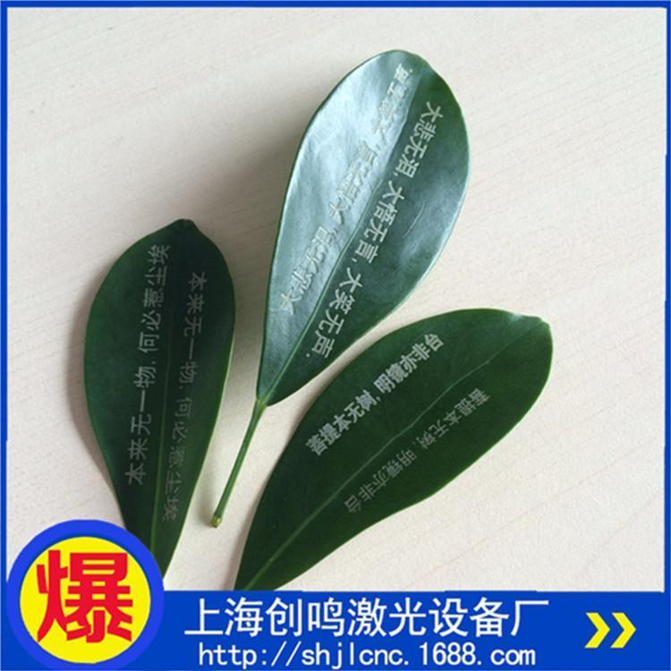 上海厂家直销 茶叶树叶二氧化碳激光刻字机 糕点CO2激光打标机