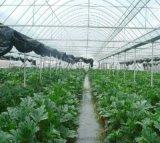 山西蔬菜大棚哪家好/玻璃温室大棚安装/新乡市日升农