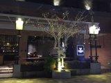 艺术树 装饰树 工艺品