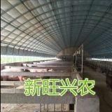 肉鸡养殖大棚 保温大棚生产基地新旺兴农