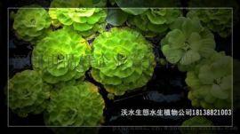 广东那里有水生植物基地