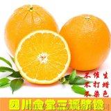 四川农家现摘金堂脐橙新鲜孕妇儿童水果甜橙酸甜桔子无核特产橙子
