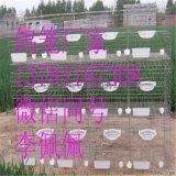 鸽子笼采购就找安平飞创 三层鸽笼 四层鸽笼 鸽笼图片 鸽子笼组装