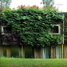 納雍植物牆設計及施工單位爲植物牆行業的生態園林建設領航者