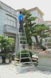 安稳耐铝梯 农艺三脚梯 园林三角梯 果园三脚梯 绿化三角梯 铝合金梯子