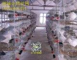 鸽子养殖笼,鸽笼用品用具,鸽子笼阳台,鸽具鸽笼