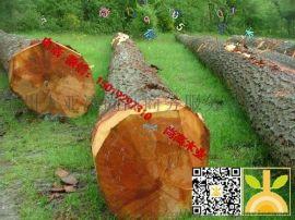 尚高木业供应欧洲的大径A级花旗松,木材质量高贵