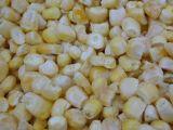 FD甜玉米
