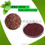 新疆天然葡萄籽提取物 葡萄籽濃縮粉 原花青素 OPC