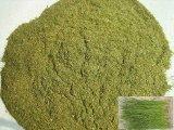 绿色松针粉,菊花粉,艾叶粉,益母草粉