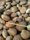 天然鹅卵石生产厂家  河北石家庄天然鹅卵石批发