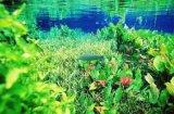 水族灯管有哪些规格|南京华强,让鱼类更具观赏性